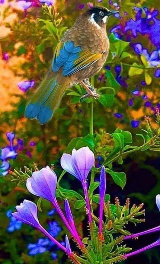 Доброе утро картинки красивые с животными и птицами движущиеся
