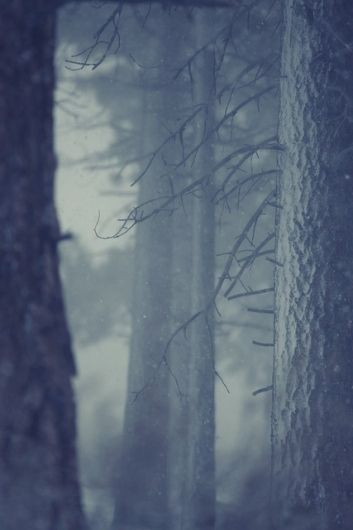 Snow in forest | Flickr - Photo Sharing!