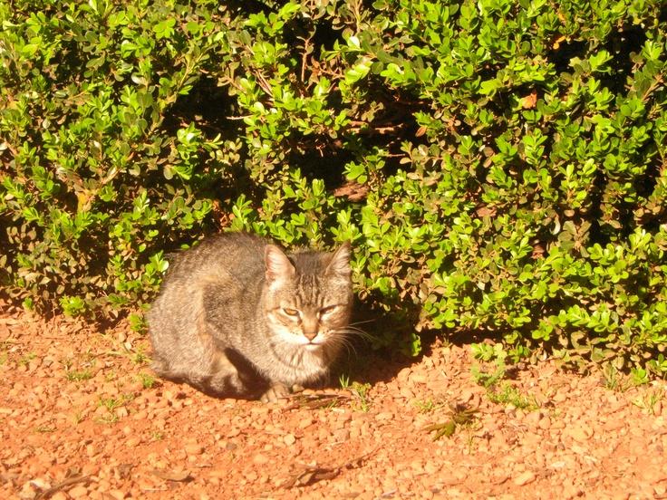Otro gato en el Jardín Botánico de Buenos Aires. 2008