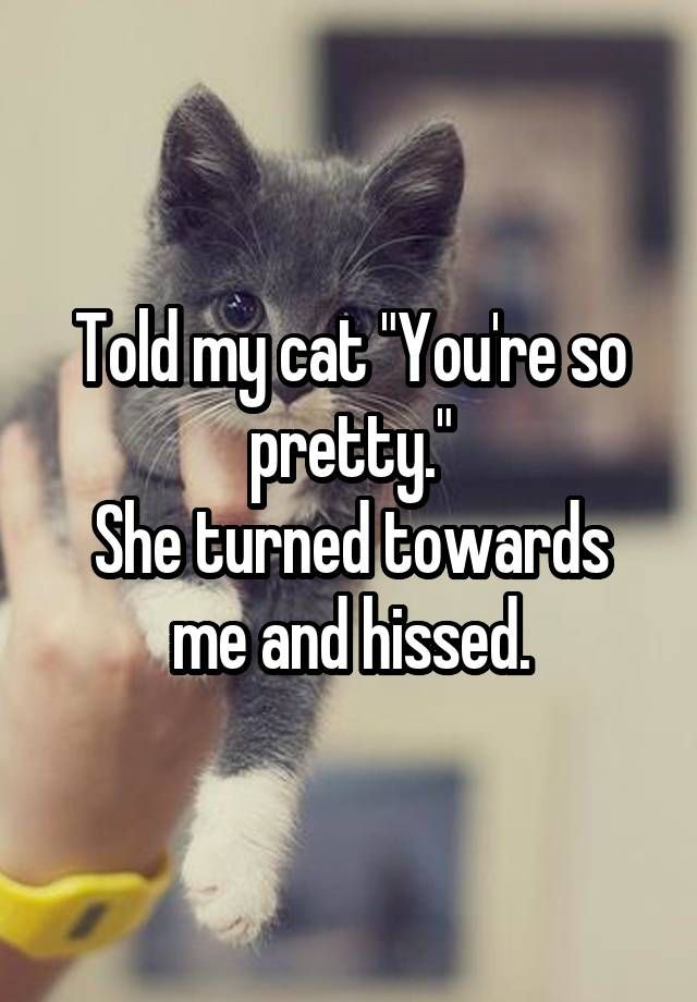 """""""Told my cat """"You're so pretty."""" She turned towards me and hissed."""""""