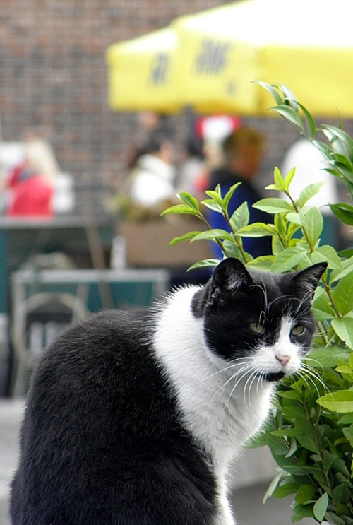 Kot w Krakowie