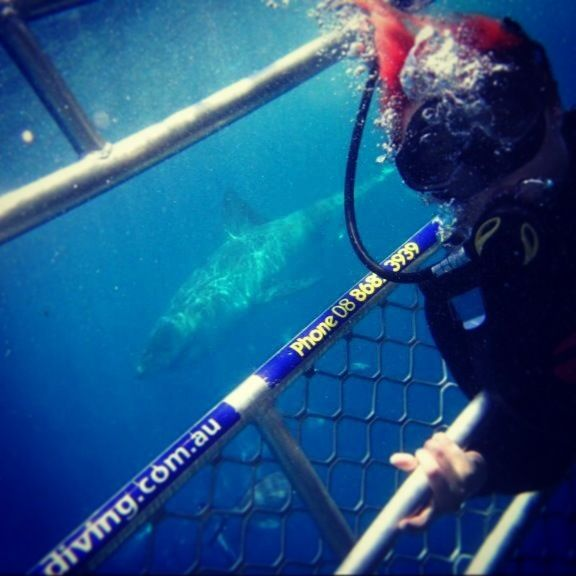 Shark diving! They got so close to us! :)
