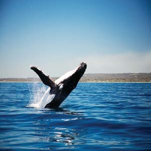 Whale watching, Augusta, Western Australia