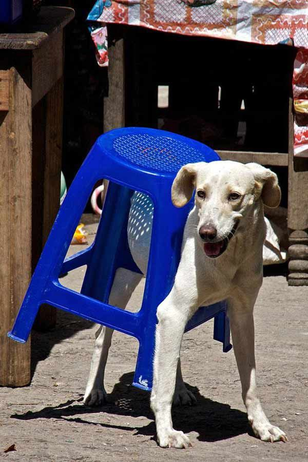 pets-stuck-furniture24