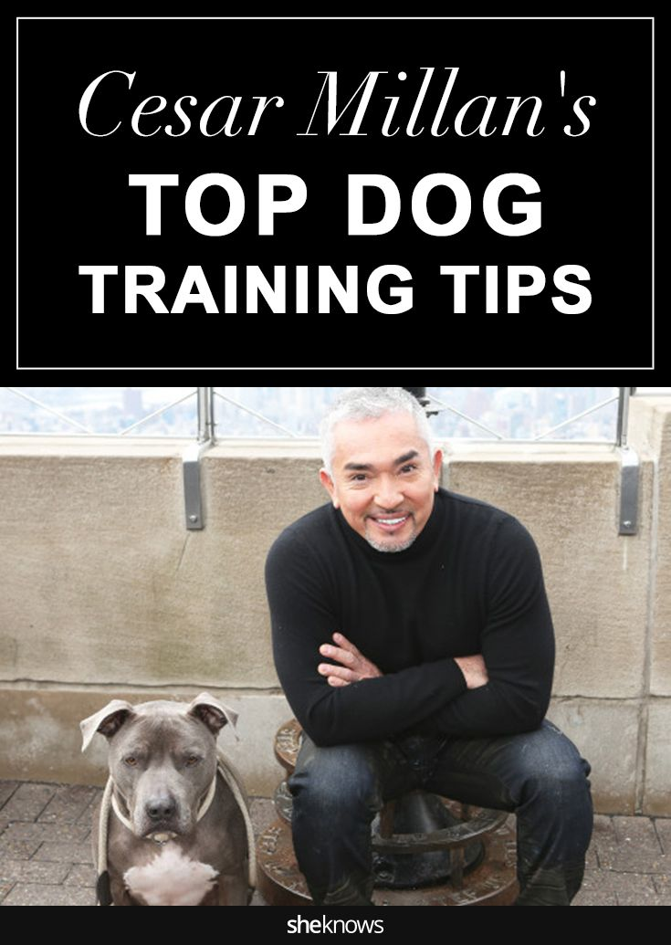 Cesar Millan spills some of his best secrets for training your furry friend