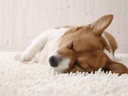Lethargic (Adjective) unnaturally drowsy; sluggish; dull