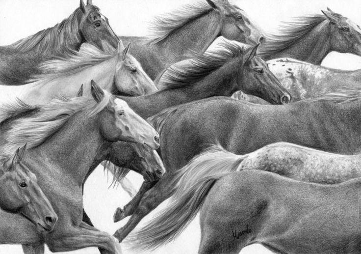 STado koni, rysunek wykonany ołówkiem.