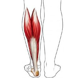 How To Treat Calf Muscle Strain