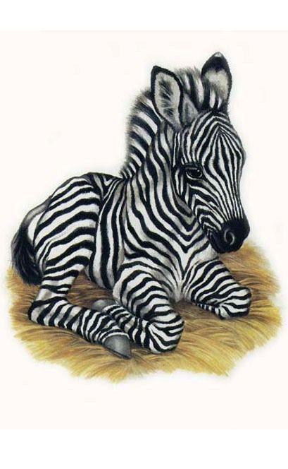 Best 25+ Zebra illustration ideas on Pinterest | Zebra ...