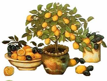 Sláva citronu