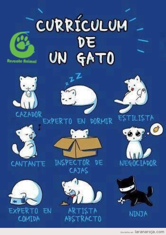 El currículum de un #gato ;) #mascotas #infografias