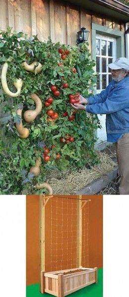 Above In The Photo Is Another Great Ideal For A Vertical Garden. Also, marigolds keep tomato pests away