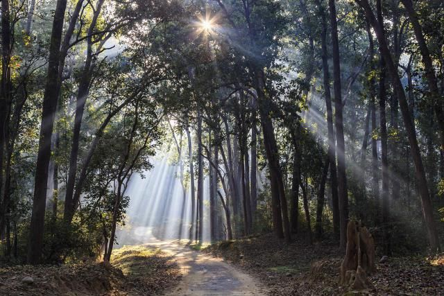 From Trekking to Temples: 12 Best Places to Visit in Uttarakhand: Corbett National Park