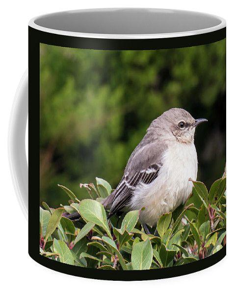 Mockingbird Coffee Mug by Leslie Montgomery.  Small (11 oz.)