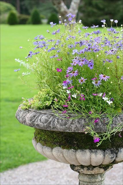mossy urn