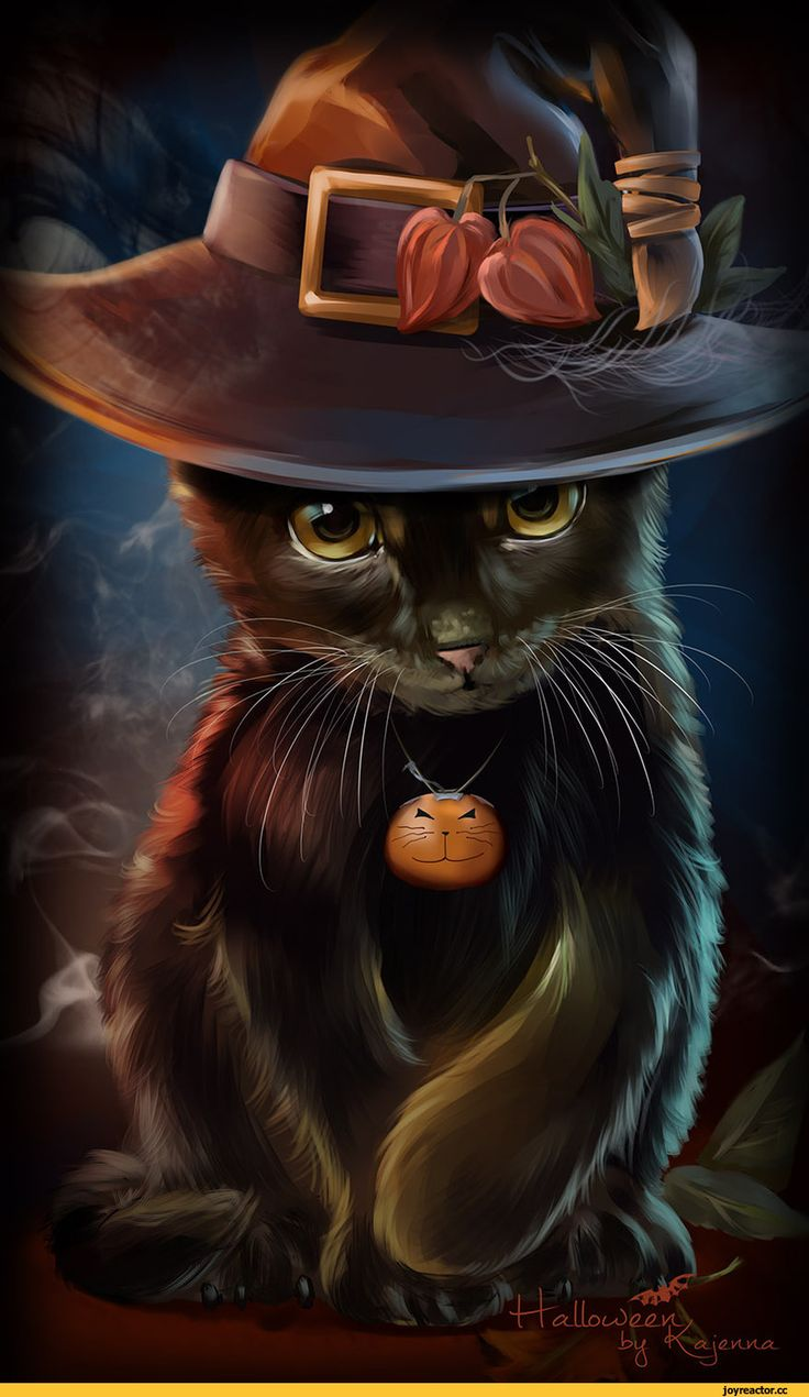 Картинки с кошкой в шляпе