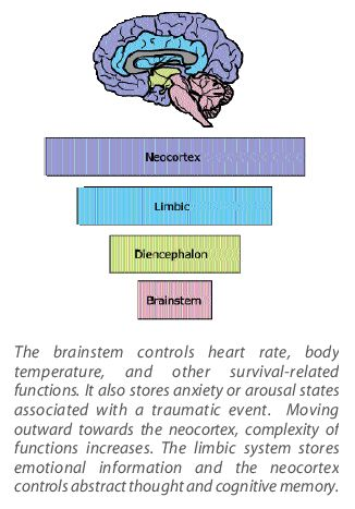 """Perry: Rhythm Regulates the Brain 