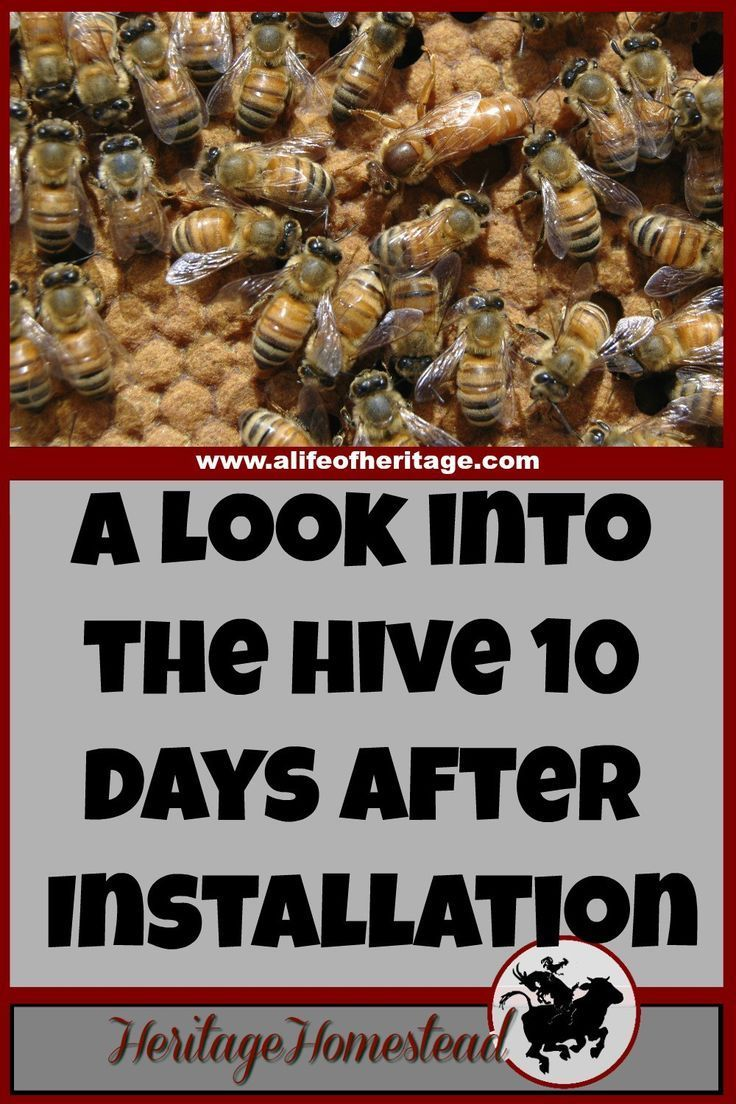 9712 Best Bee Keeper Tips Images On Pinterest Advertising Ideas Beehive Phone Wiring Diagram Bees Care How To Hive What Your May Look Like Ten Days After Installing A Package The Honey Life Cycle Has Most