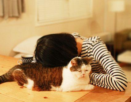 aku gak suka kucing, tepatnya takut... tapi gambar ini , waw