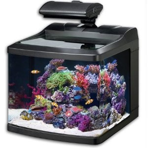 17 Best Images About Pico Reef Tanks On Pinterest