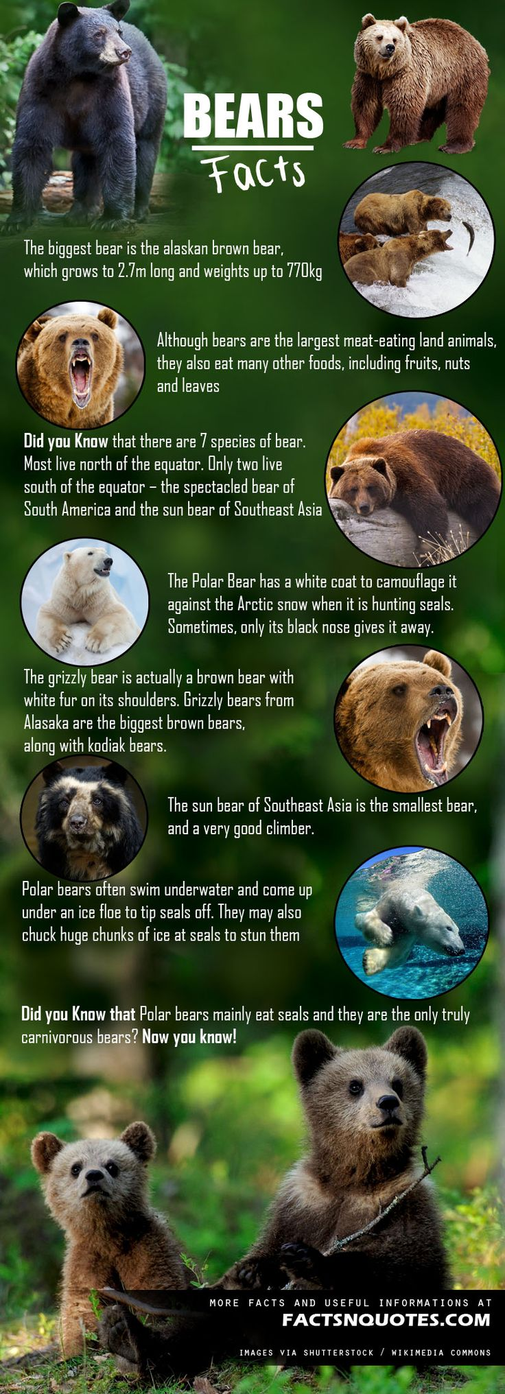 Interesting Bears Facts You Should Know
