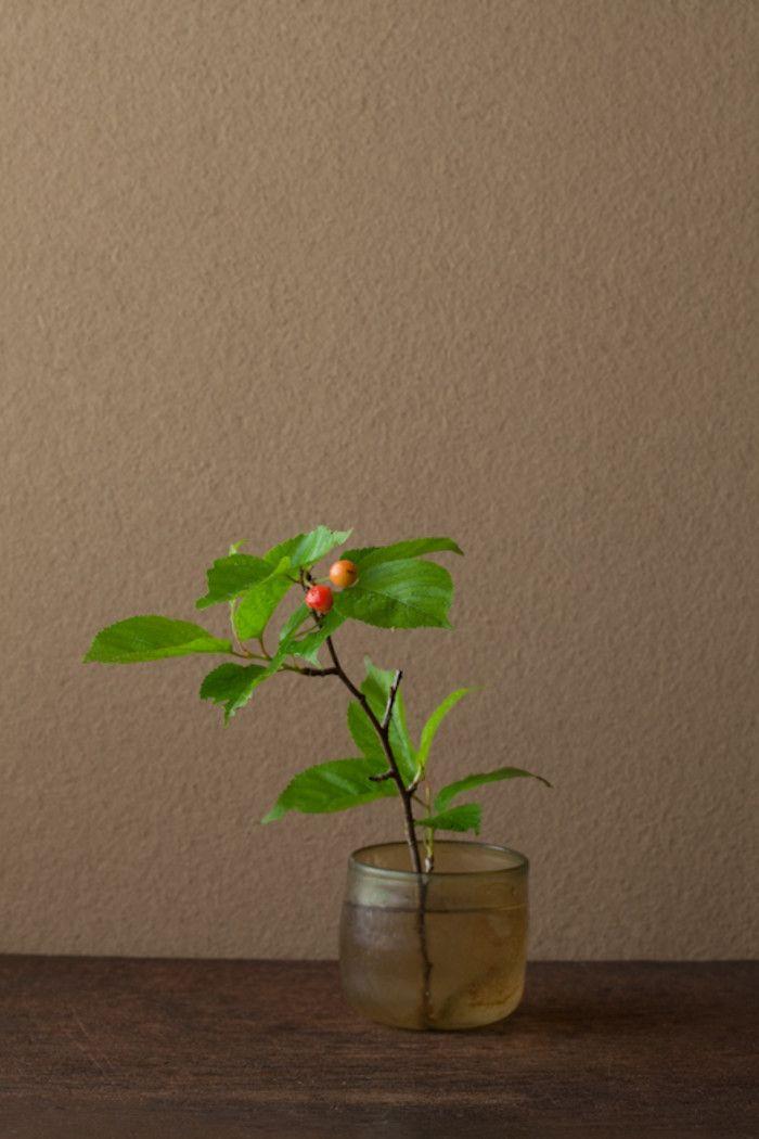 原来樱桃是这么漂亮的植物~~ 2012年6月19日(火) 桜桃忌。太宰治の命日です。 花=桜桃(オウトウ) 器=ローマングラス碗(ローマ時代)