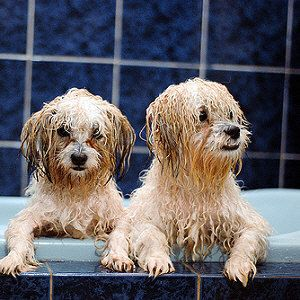 Best Doggie Bath Time Images On Pinterest Bedroom Cute - 24 animals that really arent happy about it being bath time