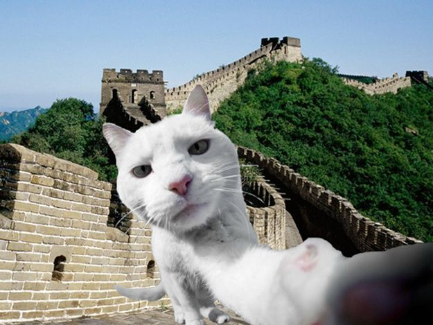 12 Pictures Of Some Well-Traveled Cats | Travel Fun with ...