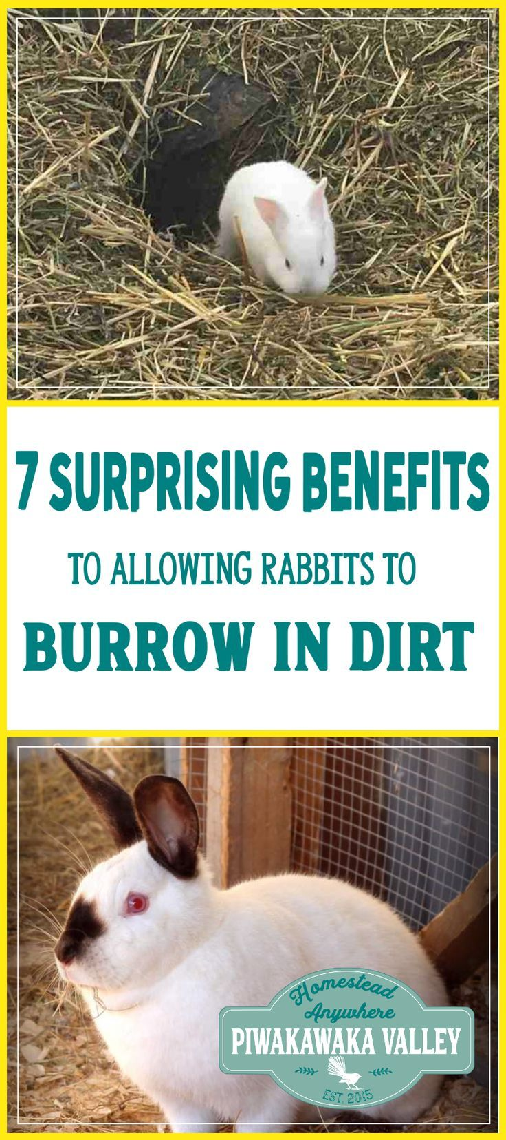 112 best backyard rabbits images on pinterest raising rabbits