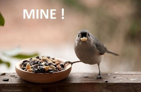 Too funny: Funny Image, Cute Birds, Birds Food, Photo Poses, Funny Pictures, Little Birds, Funny Birds, Wild Birds, Feathers Friends