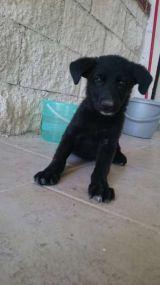 MIL ANUNCIOS.COM - Regalo perro. Compra-venta de perros regalo perro en Granada. Regalo de cachorros..