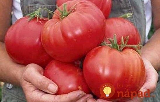 Chtěli byste, aby vám na zahradě vyrostly velké a zdravé rajčata?  Stačí je třikrát zalít tímto kouzelným roztokem, který si uděláte doma!