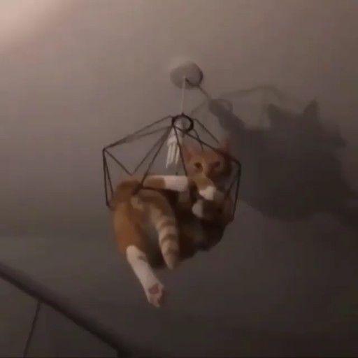 Das Beste | 2019 Litter Locker Cat Mat + KOSTENLOSER Versand
