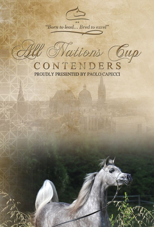 D Ajayeb - All Nations Cup Junior Filly Contender