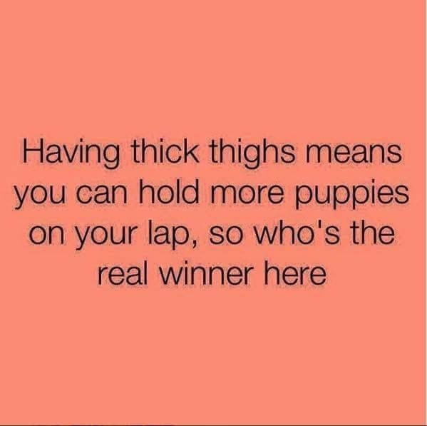 Puppies on your lap.Funny and true! and true!