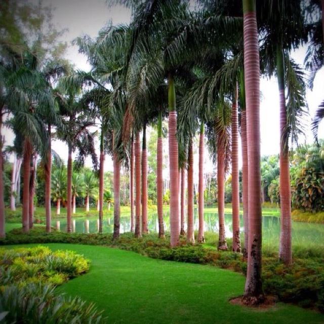 Inhotim Botanical Gardens - Brumadinho - Minas Gerais - Brasil