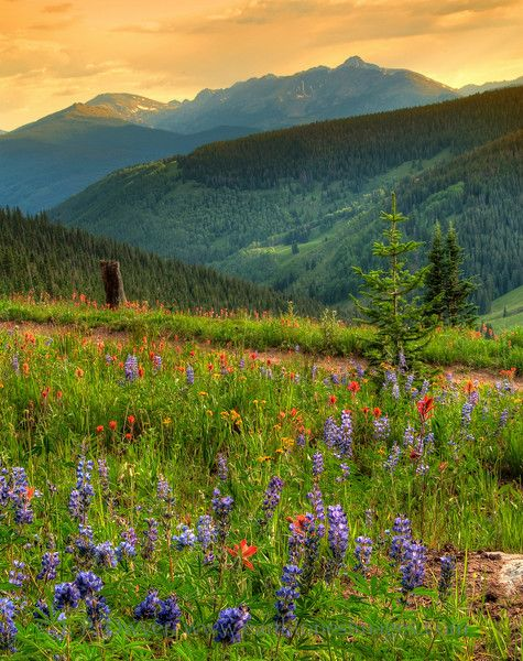 Vail, Colorado - wildflowers, amphitheater, whitewater, fly fishing, mountain biking, horse riding, NY Philharmonic, Dallas Symphony.....lots of fun.