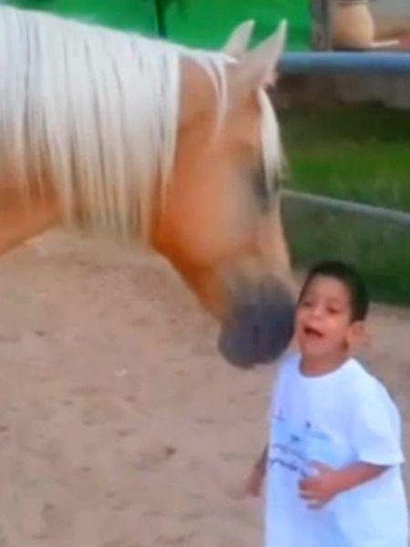Das Glück eines kranken Jungen kommt auf vier Hufen: Mit viel Einfühlungsvermögen schließt in diesem Video ein Pferd Freundschaft mit einem behinderten Kind.
