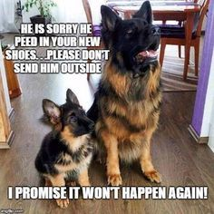 Funny German Shepherd meme for dog lovers, click here to check out this hilarious German Shepherd..  German Shepherd also known as the Alsatian is a popular dog breed  http://HarrietsDogGifts.com for funny German Shepherd gifts for dog.