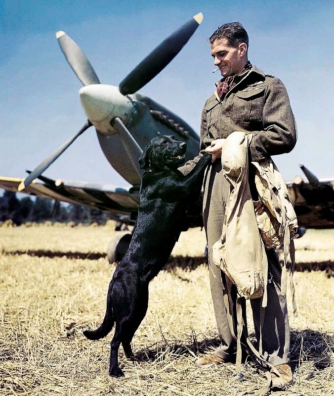 Best British flying ace of World War II, James 'Johnny' Johnson (James Edgar Johnson, 1915 - 2001) with a Labrador named Sally. In the background Spitfire fighter Mk.IX (Supermarine Spitfire Mk.IX).