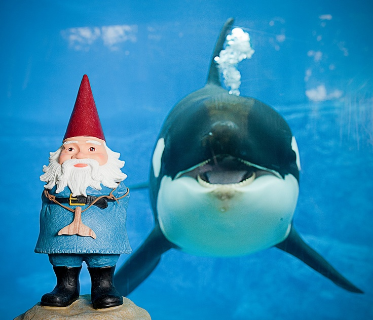 He's right behind me, isn't he? #roaminggnome #travelocity