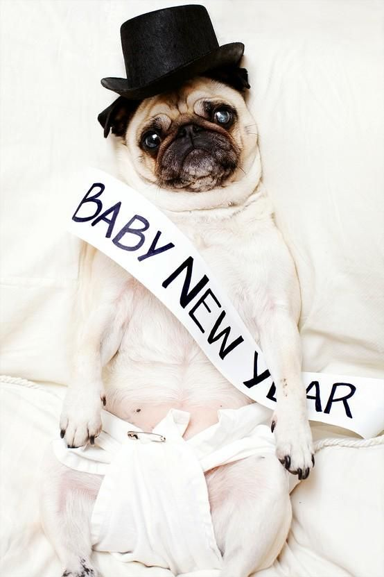 baby new year Pug: Happy New Years, Halloween Costumes, Pet, Holidays, Years Pugs, New Baby, Baby Pugs, Animal, Tops Hats