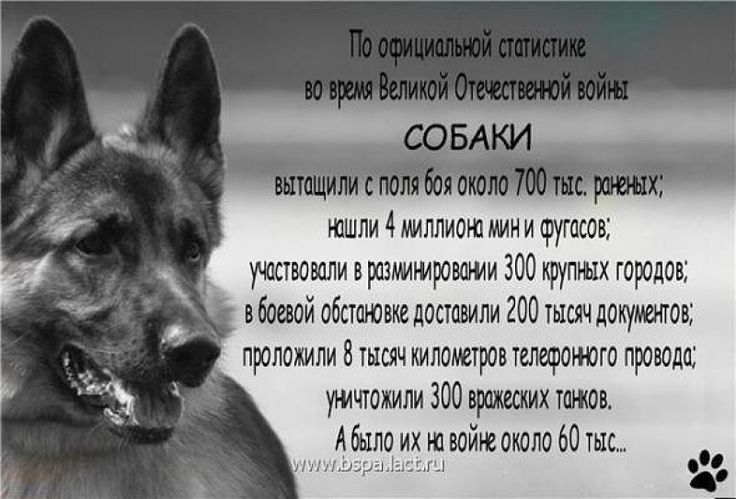 Собаки в Великой Отечественной войне » Женский Мир