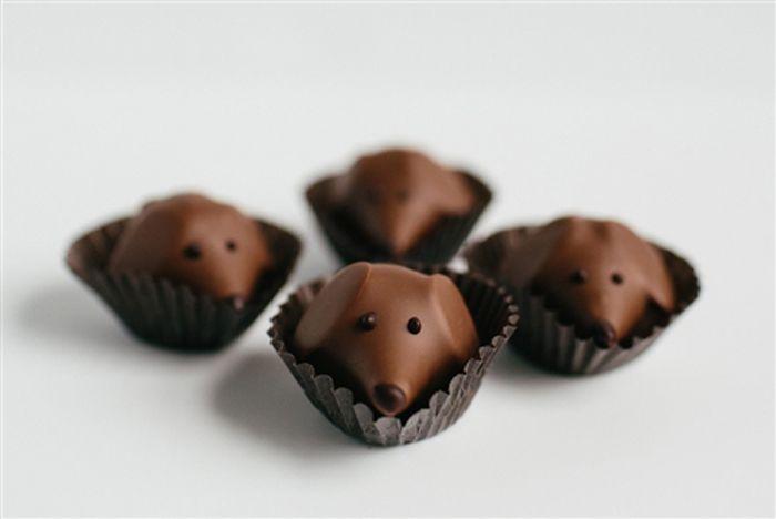 gah! peanut butter/chocolate pups (looks just like my wiener dog!)