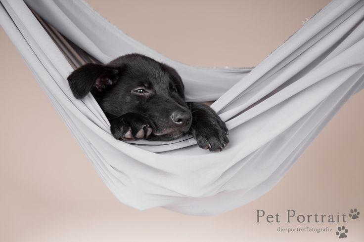 Hondenfotografie Hillegom en Heemstede - Duitse Herder pup Wolf-15