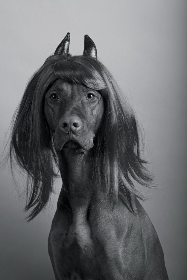 Community Post: 50 Hilarious Dogs In Wigs