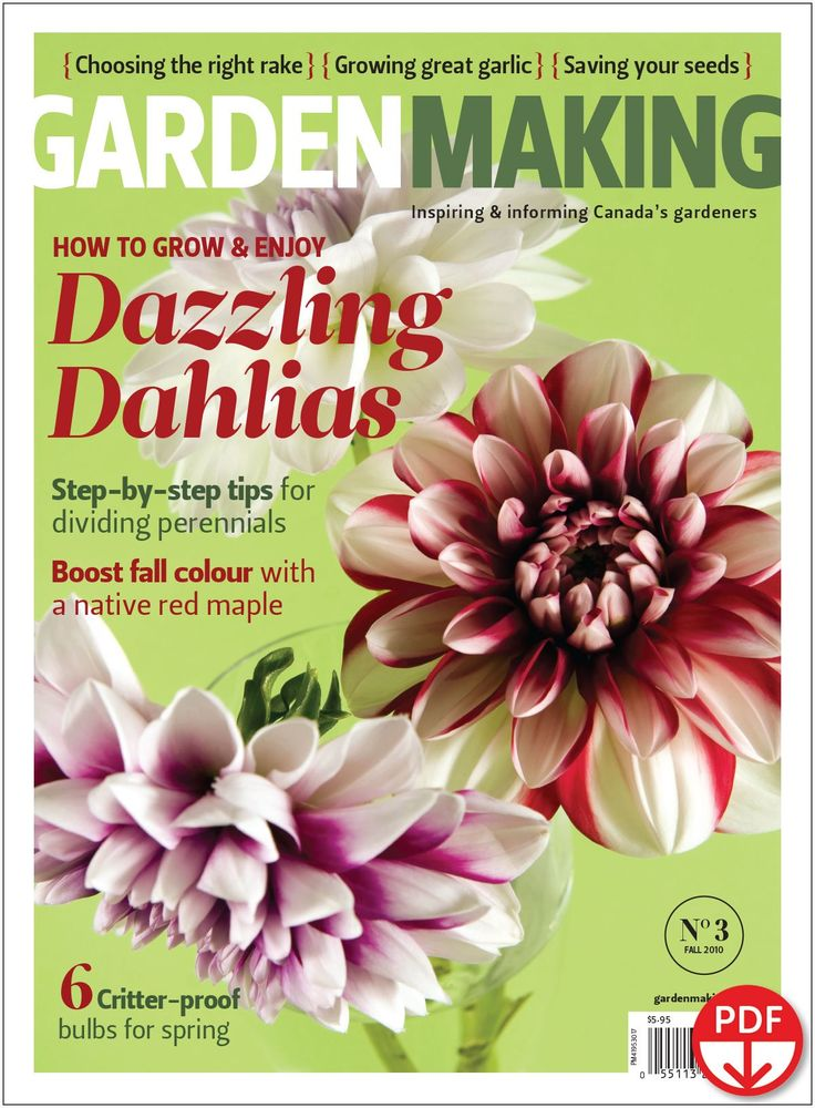 How to Grow & Enjoy Dazzling Dahlias (Issue 3)