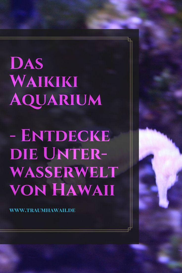 Waikiki Aquarium, Oahu, Hawaii Du möchtest die Unterwasserwelt von Hawaii erkunden ohne dafür Tauchen zu gehen, dann entdecke das Waikiki Aquarium für Dich. Dort leben auch ein paar der berühmten hawaiianischen Mönchsrobben. #traumhawaii www.traumhawaii.de