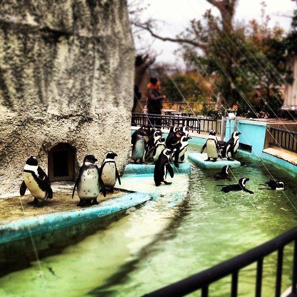 上野動物園 (Ueno Zoo) in 台東区, 東京都