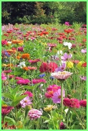50+ Garden – Cottage Garden Mix – Mehrjährige und zweijährige Blumen – Blumensamen – Sarah …   – Schön